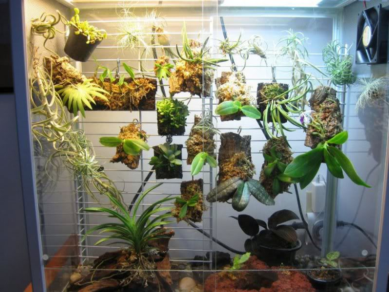 Napa Valley Orchid Society January Newsletter
